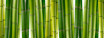 Bamboo-Panoramic
