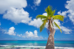 Single Palm Tree On Beach