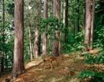 Deer 3 mural