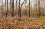 Deer Forest mural