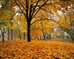 Autumn in Manito Park Spokane mural