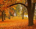 Manito Park Autumn mural