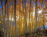 Aspen Grove Gunnison National Forest mural