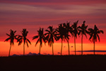 Palm Trees  Sunset Queens Road Fiji