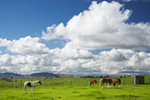 Horses  Farmland New-Zealand