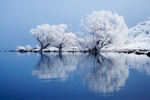 Frosted Willow Tree Reflection mural