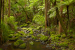 Waikoromiko Stream  Forest mural