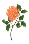 Orange Peony Beare mural