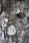 Tree Bark 2 mural