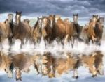 Horses Reflection mural