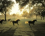 Horse Farm Morning