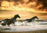Thoroughbred Splashing Surf