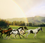 Paint Horses With Rainbow Mountains mural