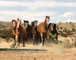 Spanish Mustang Herd mural