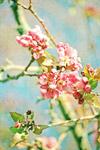 Spring Blossoms Longenecker mural