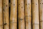 Bamboo English mural