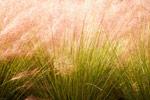 Tall Grasses mural