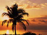 Coconut Palms At Sunrise Sanibel Island Causeway Florida mural