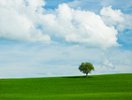 Tuscan Field Tree mural