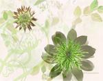 Emerald Garden mural
