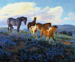Blue Bonnet Sunrise